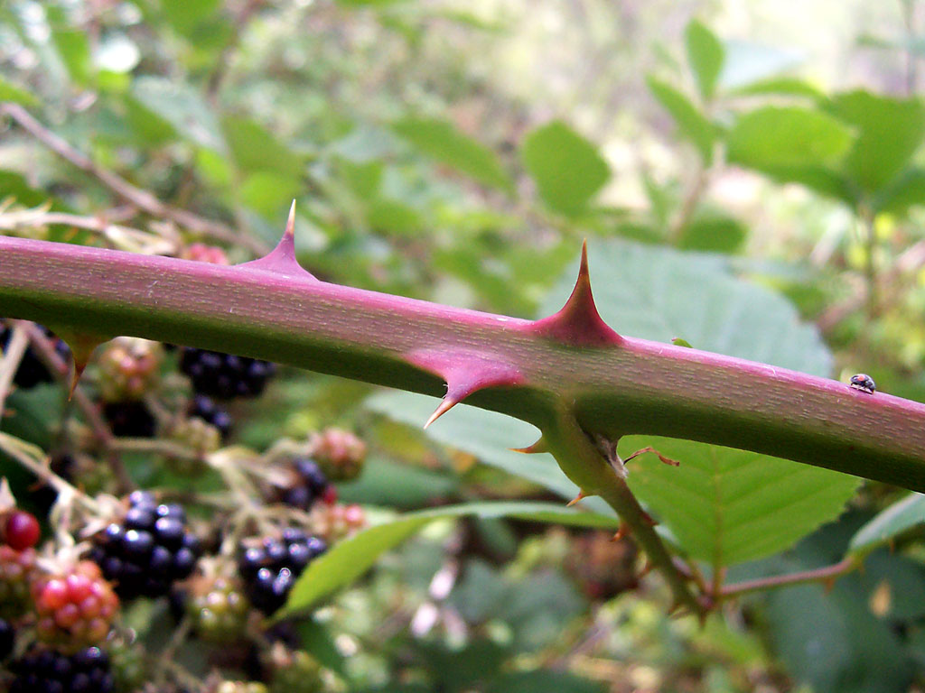 3 Fascinating Species Invading Vancouver This Summer | The ...